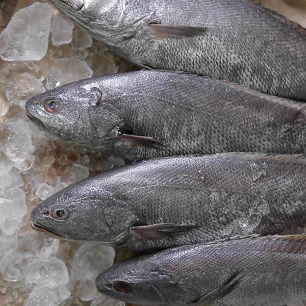 [그린씨푸드] 국내산 반건조 민어(대) 300g 이상 * 10마리